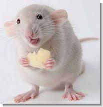 Борьба с мышами и крысами