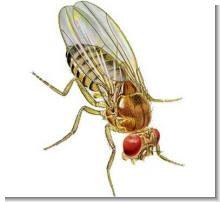 Как избавиться от летающих мошек
