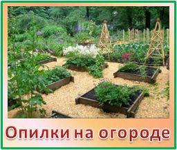 Опилки на огороде