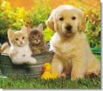 Из-за чего у кошек и собак выпадает шерсть
