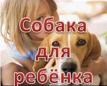 Выбор породы собаки для ребёнка