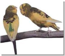 Советы для начинающих любителей птиц