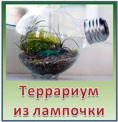 Террариум из обычной лампочки